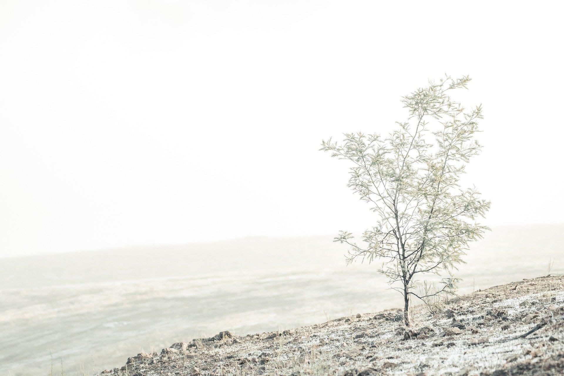 Gedicht: Vandaag is de wereld in winter gekleed…  –  Mischa de Vreede